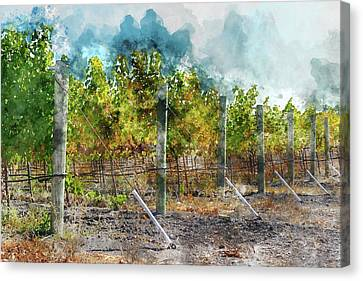 Vineyard In Autumn Canvas Print