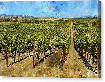 Vineyard In Napa Valley California Canvas Print by Brandon Bourdages