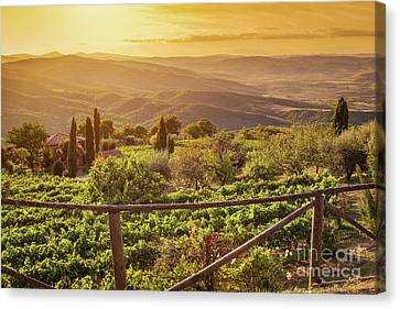 Vineyard Landscape In Tuscany, Italy. Wine Farm At Sunset Canvas Print by Michal Bednarek