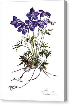 Violets Canvas Print by Danuta Bennett