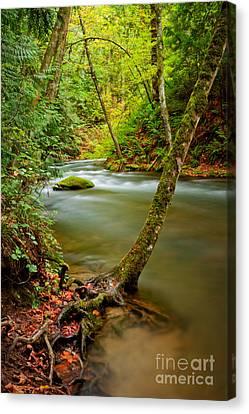 Tree Roots Canvas Print - Whatcom Creek by Idaho Scenic Images Linda Lantzy