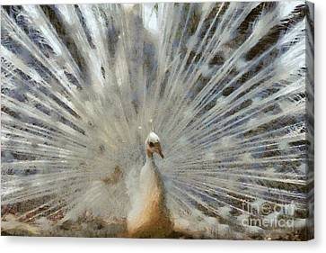 White Peacock With Open Tail Canvas Print by George Atsametakis