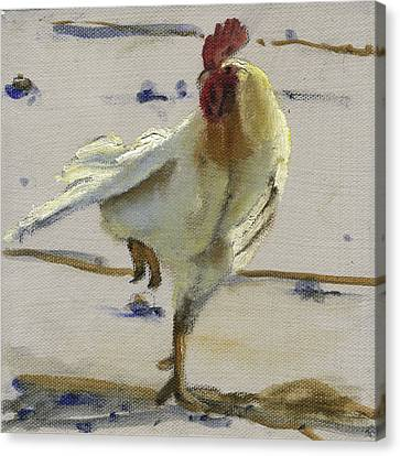 White Rooster Canvas Print by John Reynolds