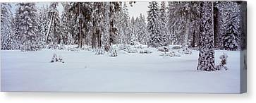Winter Snowstorm In The Lake Tahoe Canvas Print by Panoramic Images