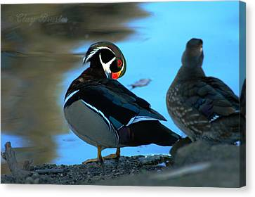 Clayton Canvas Print - Wood Duck by Clayton Bruster