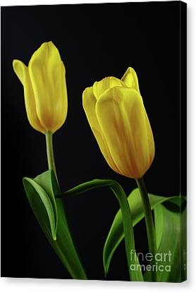 Canvas Print featuring the photograph Yellow Tulips by Dariusz Gudowicz