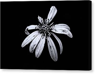Canvas Print - You're Perfect To Me - Blue Tint by Scott Pellegrin