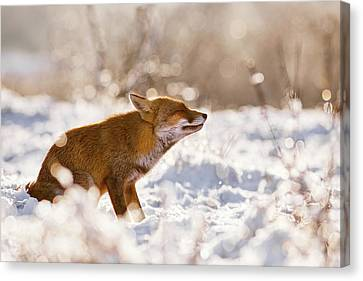 Zen Fox Series -zen Fox In The Snow Canvas Print by Roeselien Raimond