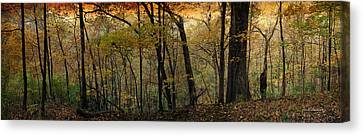 2015 Autumn Panorama In The Woods Textured Canvas Print by Thomas Woolworth
