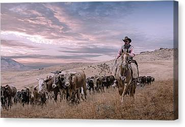 2016 Reno Cattle Drive Canvas Print