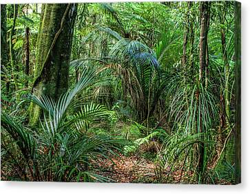 Canvas Print featuring the photograph Jungle by Les Cunliffe