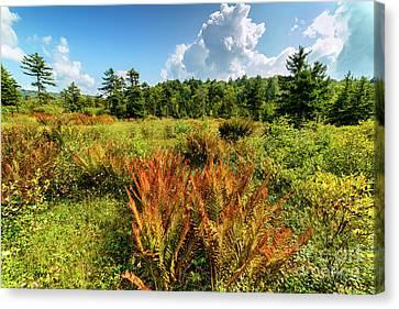Cranberry Glades Botanical Area Canvas Print by Thomas R Fletcher