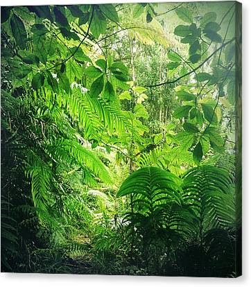Jungle Leaves Canvas Print by Les Cunliffe