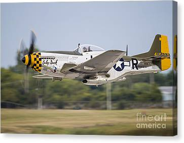A P-51 Mustang Takes Off From Waukegan Canvas Print by Rob Edgcumbe
