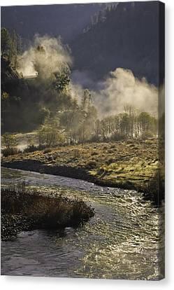 Dog In The Fog Canvas Print by Sherri Meyer