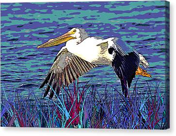 Concern Canvas Print - American White Pelican by Charles Shoup