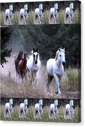 American Wild Horse Mustang On Posters Canvas Pillows Curtains Duvetcovers Phone Cases Tshirts Jerse Canvas Print by Navin Joshi