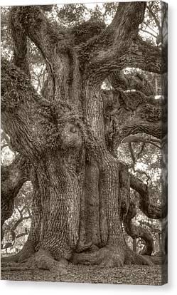 Oak Canvas Print - Angel Oak Live Oak Tree by Dustin K Ryan