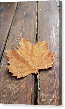 Autumn Leaf With Dewdrops Canvas Print by George Atsametakis