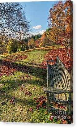 Canvas Print featuring the photograph Autumn Leaves by Adrian Evans