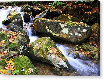 Autumn Mountain Stream Canvas Print by Thomas R Fletcher