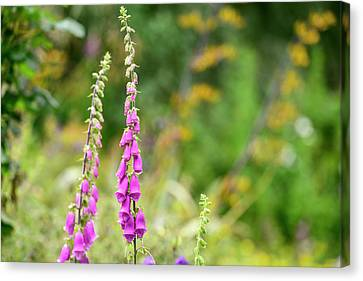 Foxglove Flowers Canvas Print - Beautiful Summer Garden Landscape With Beautiful Foxgloves In Fo by Matthew Gibson