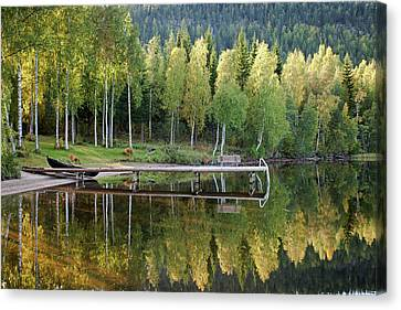 Birches And Reflection Canvas Print