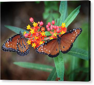 Butterfly Garden Canvas Print by Joseph G Holland