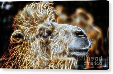 Camel Collection Canvas Print by Marvin Blaine