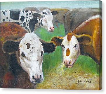 3 Cows Canvas Print by Oz Freedgood