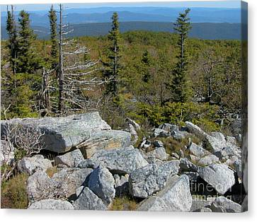 Dolly Sods Wilderness Canvas Print by Thomas R Fletcher