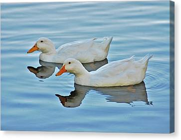 Canvas Print featuring the photograph 3- Ducks by Joseph Keane