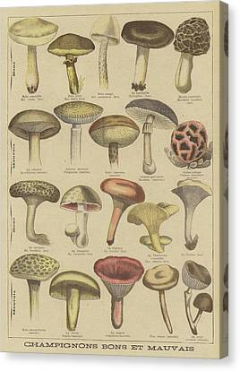 Mushroom Canvas Print - Edible And Poisonous Mushrooms by French School
