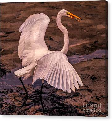 Canvas Print - Egret With Fish by Paulette Thomas