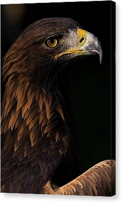 Canvas Print featuring the photograph European Golden Eagle by JT Lewis
