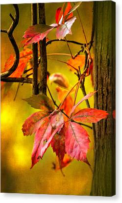 Canvas Print featuring the photograph Fall Colors by Eduard Moldoveanu