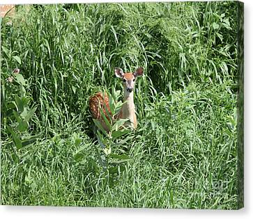 Fawn In The Grass Canvas Print by Lori Tordsen