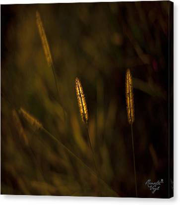 Licht Canvas Print - Flowery by Renata Vogl
