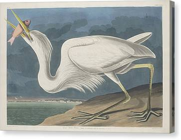 Heron Canvas Print - Great White Heron by Dreyer Wildlife Print Collections