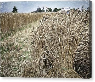 Harvest Time Canvas Print by F Leblanc