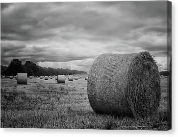 Dry Land Canvas Print - Hay Bales by Martin Newman