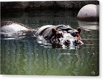 Hippo Canvas Print by Thea Wolff