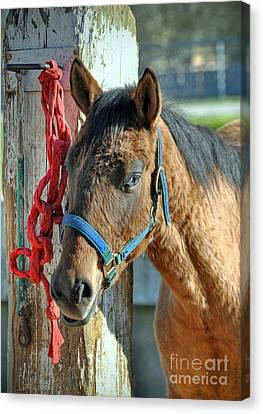 Horse Canvas Print by Savannah Gibbs