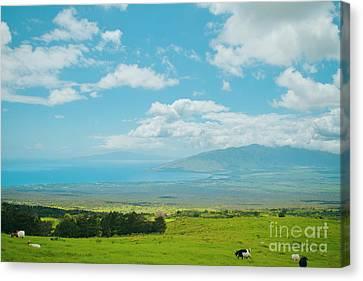 Kula Maui Hawaii Canvas Print by Sharon Mau