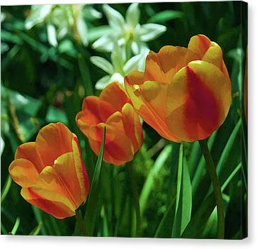 Canvas Print featuring the photograph 3 Lips Tulips by Sheryl Thomas