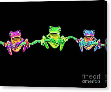 3 Little Frogs Canvas Print by Nick Gustafson