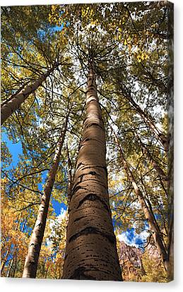 Looking Up Canvas Print by Marilyn Hunt