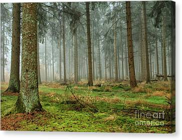 Canvas Print - Misty Forest by Patricia Hofmeester