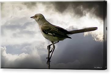 Mockingbird Canvas Print by Brian Wallace