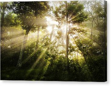 Morning Rays Canvas Print by Andrew Soundarajan